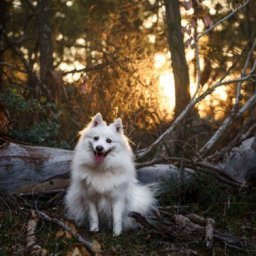 HerCanberra's Pawfect Portraits