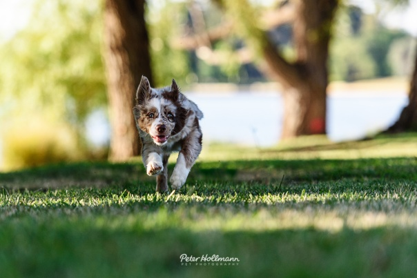 Canberra-pet-photography-3.jpg
