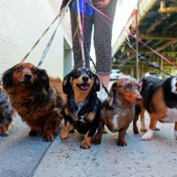 HerCanberra's Five Unwritten Rules of Dog Walking