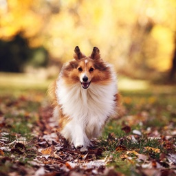 HerCanberra's Pamper Your Pooch: Four Canberra Dog Friendly Services